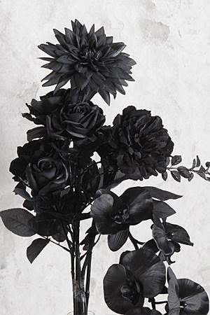 Cool Black Rose L