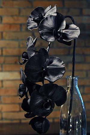 Cool Black Phalaenopsis orchid