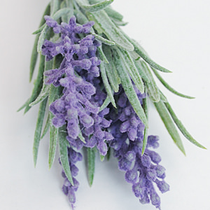 Lavender Bunch S