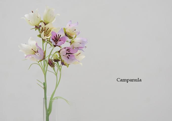 カンパニュラ