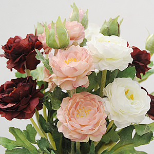 Mini Ranunculus