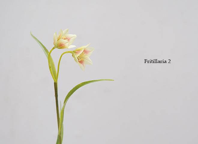 フリチラリア 2