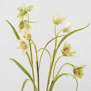 Fritillaria 2