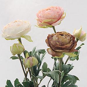 Ranunculus L