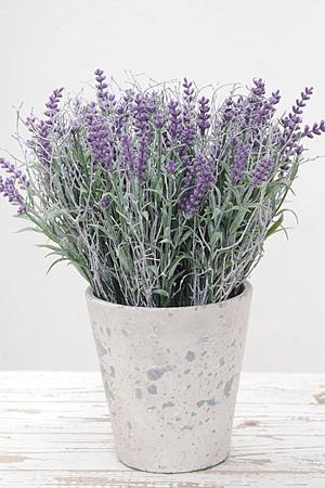 Lavender Bunch M